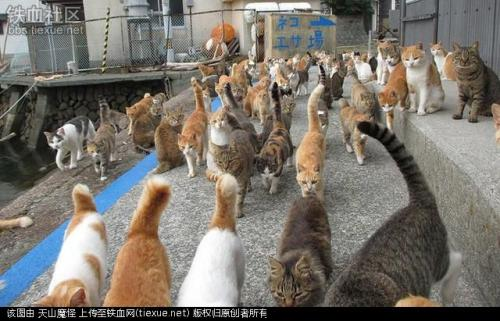 日本著名猫岛将为所有猫咪做绝育手术