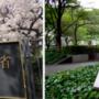 """旅日华人创建""""霓虹医疗直通车"""",中介资质获得日本政 府机构许可"""