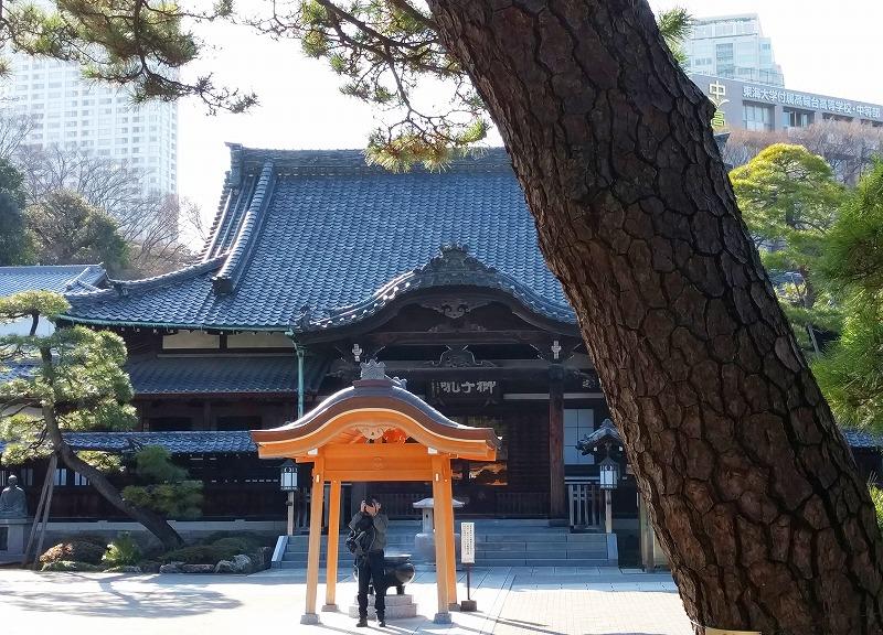 松の木越しに見える泉岳寺本堂