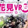 日企推出VR赏樱手机APP 无须介意花粉症