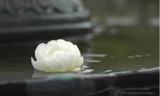 江東良一报导佛教经典名篇:净空法师讲佛经-打倒欲望 智慧現前
