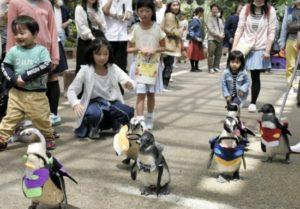 日本松江企鹅身穿EVA服装大摇大摆散步
