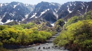 日本鸟取县的大山残留融雪 映衬嫩芽的美