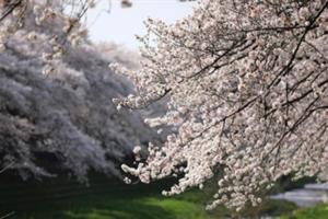 一年117亿元!花粉过敏给日本带来巨额损失