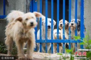 华媒:如何处理流浪狗?日本人训练它们成警犬