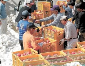 """山形县朝日町""""雪苹果""""上市 甜味绝妙"""