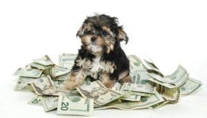 话题:日本宠物保险市场不断扩大