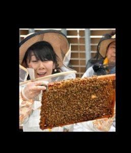 """宫城县富谷市打造蜂蜜特色产品 为""""甜点之街""""增添甜蜜"""