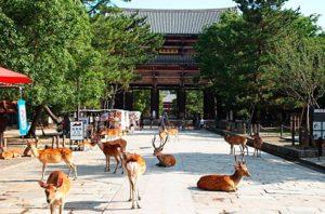 日本奈良在外国游客中人气急剧上升 但住宿却在大阪与京都