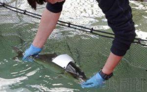 话题:近畿大学力争发射人造卫星 从太空追踪野生金枪鱼
