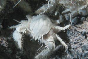 日本拟扩大海洋生态系统保护区以达成国际目标