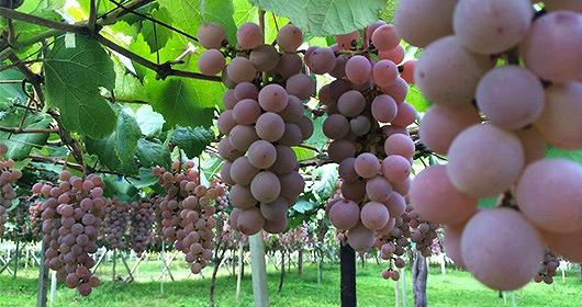 10種類以上のワインを試飲し放題・シャトー勝沼(山梨県甲州市)【連載:アキラの着目】