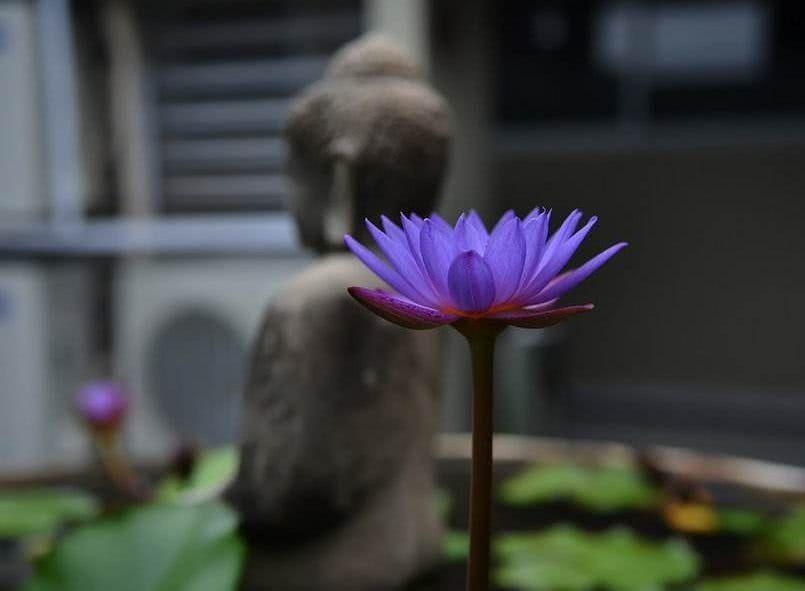 佛说:欲望是痛苦的根源,贪满者多损,谦卑者多福