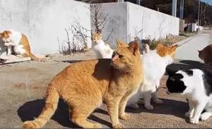 爱猫者的度假胜地 盘点日本的11座猫岛