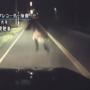 北海道暗夜小熊出没遭车撞影像曝光