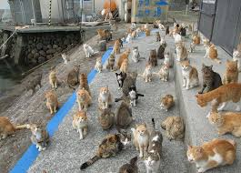 日本著名猫岛下月将对所有猫咪实施绝育