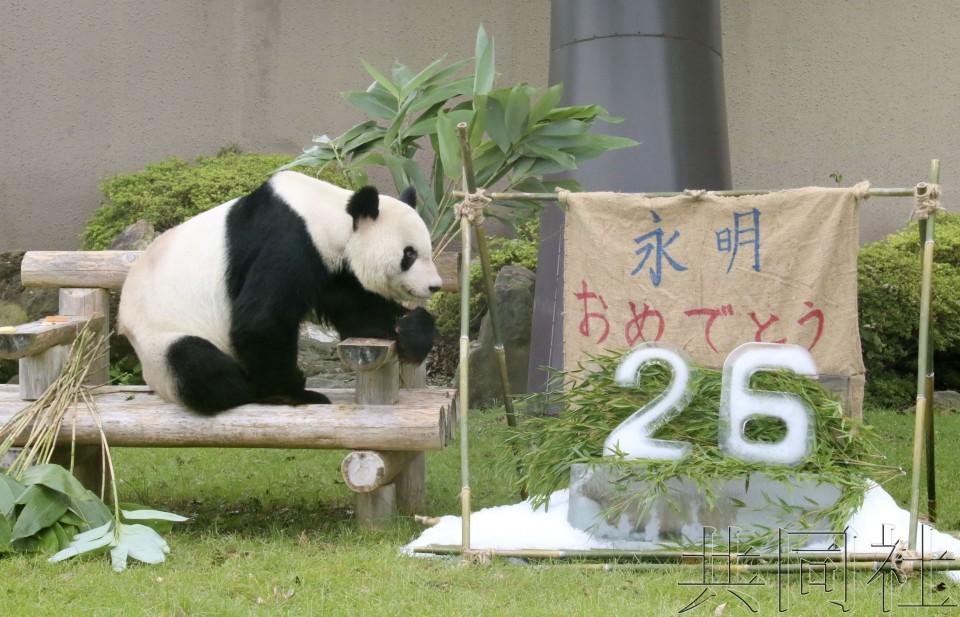 """和歌山县熊猫爸爸""""永明""""迎来26岁生日"""