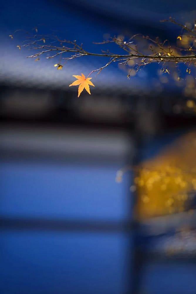 【小陆精选佛教人生】放下心中的五欲,这才算是修行20181016