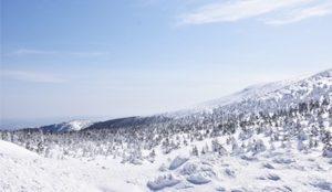 【山形】藏王树冰点灯秀