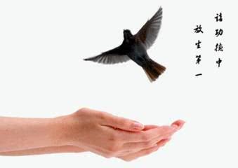 【小陆精选佛教人生】十四种不花钱的放生方法,是积累福报的大好机会20181110