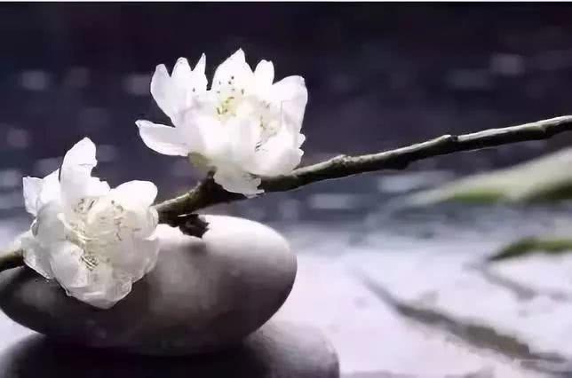 【小陆精选佛教人生】只要学会释怀,每一天都是晴天!20181111