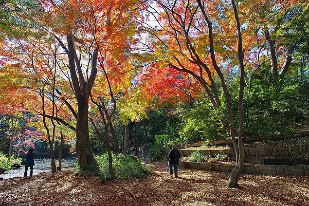 紅葉狩りと古城跡散策ができる石神井公園(東京都練馬区)【連載:アキラの着目】