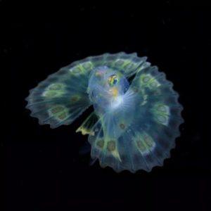 日本摄影师拍摄深海神秘生物,喜提国家地理大奖!