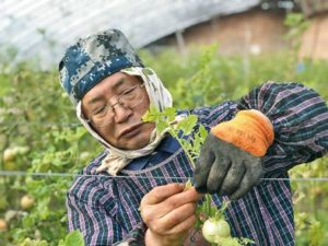 """在河南农田守望""""循环农业""""的日本老人"""