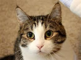 日本2018年养猫数再次超过养狗数