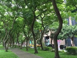 日本高校生赴新竹高商交流赞台湾绿化做得很好