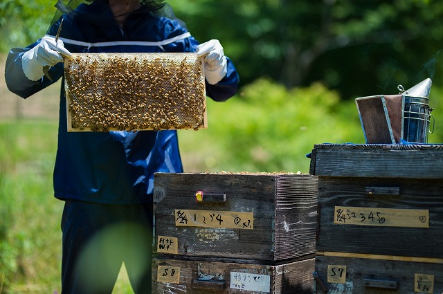 巣箱から取り出したハチミツ