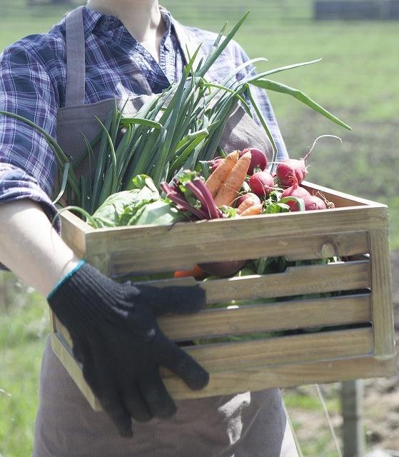都会の真ん中や駅チカの農園・菜園で農作業【連載:アキラの着目】