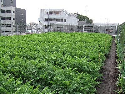 まちの畑|都心型農園!都市で畑!都会で菜園!から引用