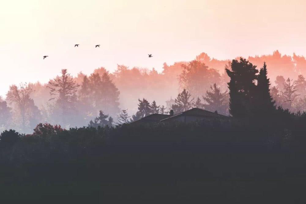 【小陆精选佛教人生】如何克服困难?星云大师揭示四种人生之难20190111