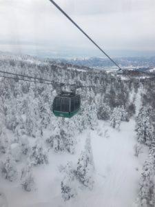 日本藏王树木遭虫害未来恐无树冰可看