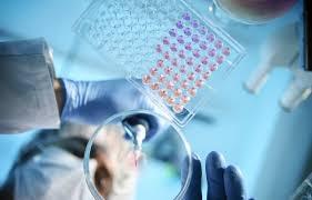 """日本""""金蛋""""一颗价值千万 利用基因编程技术有望治疗癌症"""