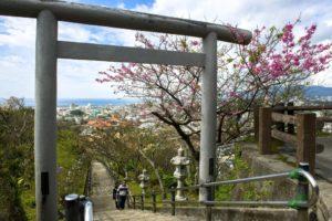 日本冲绳樱花季:1月下旬~2月中