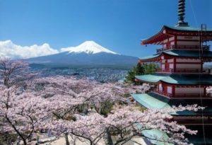 日本富士山樱花季:4月中旬