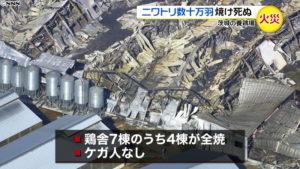 日本茨城县一养鸡场发生火灾 约34万只鸡死亡