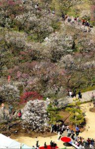 日本三大名园之一的偕乐园今秋开始收费