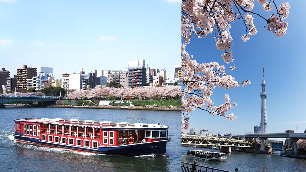 船上から優雅に桜を眺めるお花見クルーズ【連載:アキラの着目】