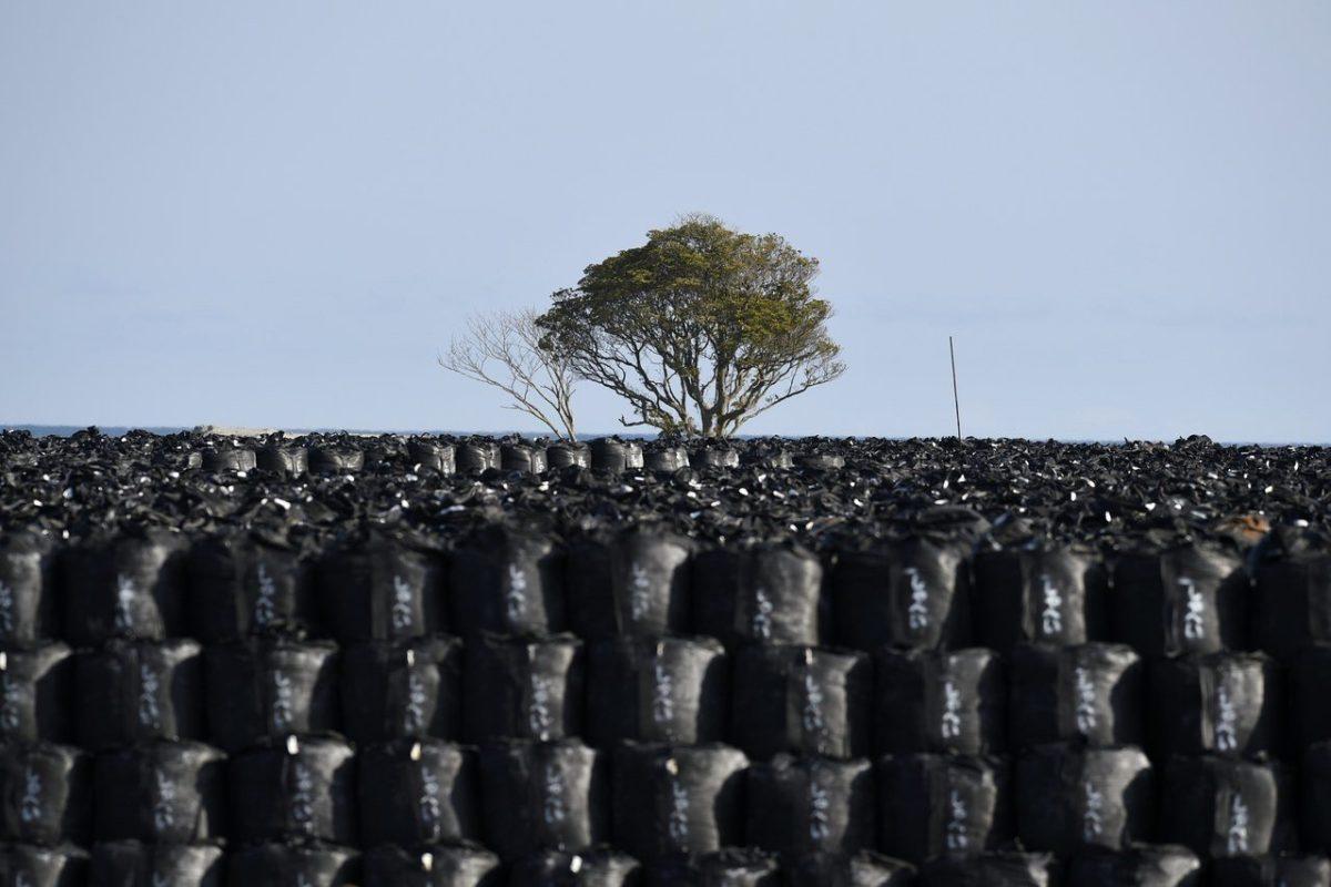 日政府拟将99%福岛污染土减污再利用县民跳脚