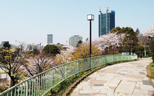 目黒川の桜を俯瞰で観るなら西郷山公園(東京都目黒区)【連載:アキラの着目】