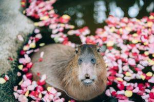 神户动物王国
