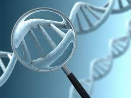 """日本警方将采用新试剂使DNA鉴定精度升至""""京""""级"""