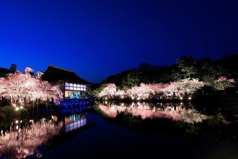 京都府京都市平安神宫枝垂音乐会