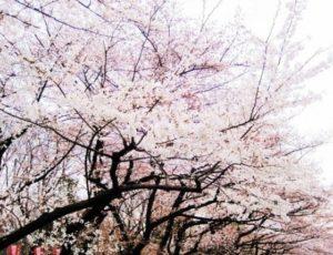 大阪|滨寺公园