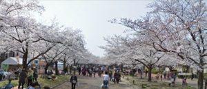 大阪|万博纪念公园