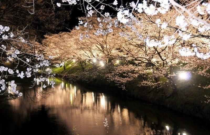 长野县上田市上田城千本樱花祭