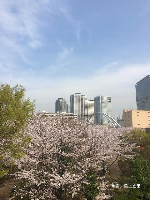 穴場の花見スポット・東品川海上公園屋上庭園【連載:アキラの着目】